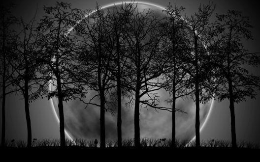 Обои Полная Луна среди деревьев ночью
