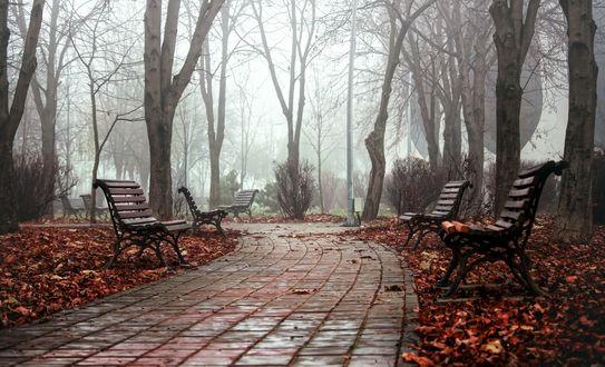 Обои Скамейки вдоль мощеной дорожки в осеннем парке