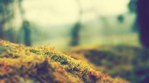 Обои Земля покрытая растущим мхом, by CarlosTown