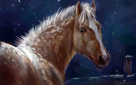 Обои Лошадь стоит у забора в ночное время