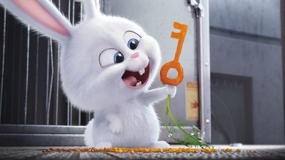 Обои Белый кролик Снежок держит морковь в форме ключа из мультфильма Тайная жизнь домашних животных / The Secret Life of Pets