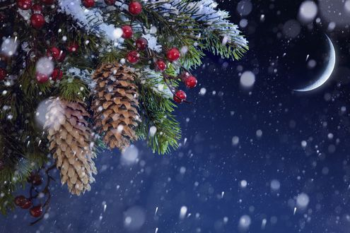 Обои Еловая ветка с шишками и красными ягодами в снегу ночью под луной