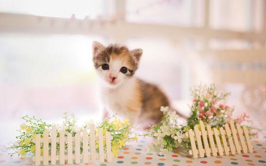 Обои Котенок на столе с полевыми цветами