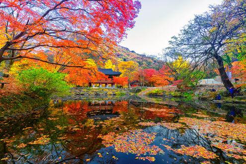 Обои Яркие цвета осени в Национальном парке Naejangasan в Корее, фотограф Thomas Kong