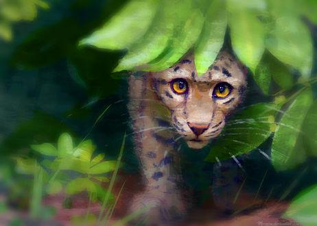 Обои Маленький леопард выглядывает из-за зеленых листьев