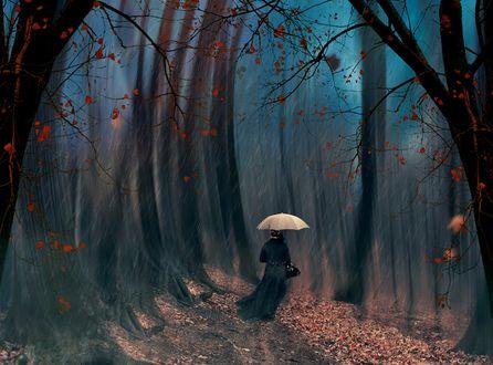 Обои Женщина с зонтом идет по осенней дорожке, фотограф Ionut Caras