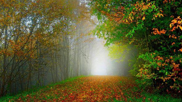Обои Усыпанная листьями дорога в осеннем лесу