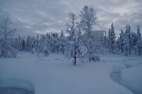 Обои Деревья, запорошенные снегом зимой
