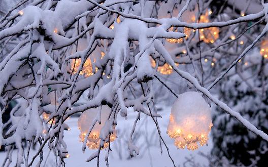 Обои На заснеженном дереве пучки горящих лампочек