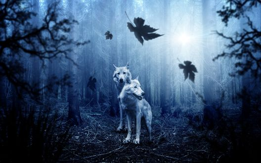 Обои Два волка в лесу
