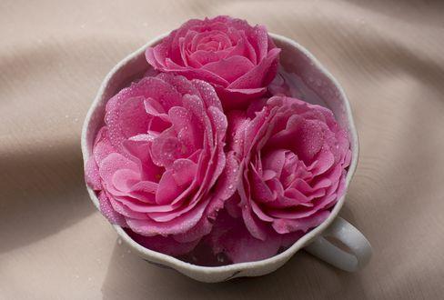 Обои Розовые розы в чашке