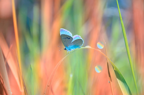 Обои Бабочка на стебле, фотограф Katrin Suroleiska