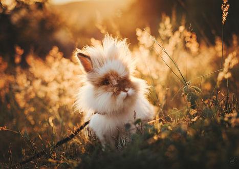 Обои Смешной кролик сидит в траве, фотограф Helena Lopes