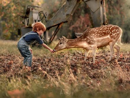 Обои Мальчик кормит олененка, фотограф Adrian C. Murray