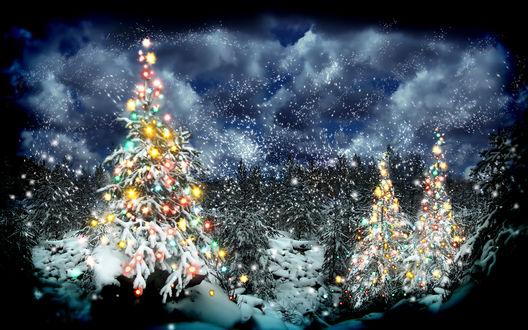 Обои Новогодние елки, наряженные огнями под снегопадом