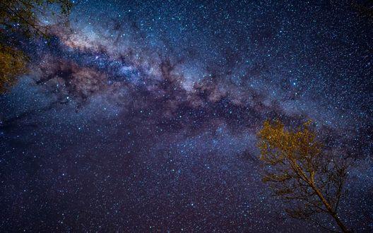 Обои Дерево на фоне млечного пути в ночном небе