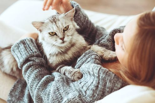 Обои Девушка собирается погладить кота