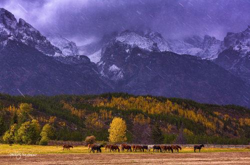 Обои Кони пасутся у подножья гор