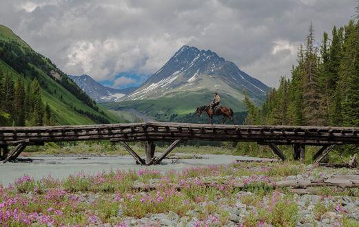 Обои Пастух на мосту