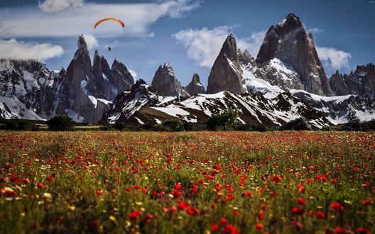 Обои Маковое поле на фоне снежных гор, вдали летит парашутист