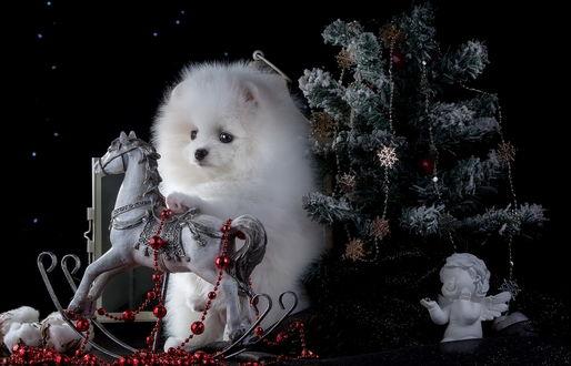 Обои Белая пушистая собачка у елочки