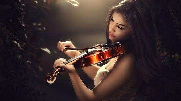 Обои Девушка играет на скрипке, фотограф Ivan Lee