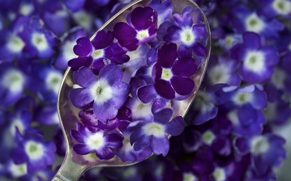 Обои для рабочего стола Ложка с фиолетово-синими цветами