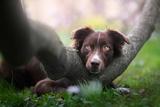 Обои Пес лежит на стволе дерева, фотограф Iza Lyson
