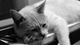 Обои Кот на пианино