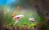 Обои Богомол и голубая бабочка на грибе