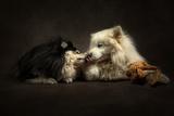 Обои Собачьи нежности, поцелуй двух собак