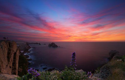 Обои На переднем плане фиолетовые цветы на фоне розово-голубого заката, фотограф cmoon view