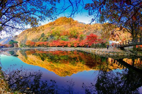 Обои Осенние краски в Naejangasan National Park in Korea / Национальном парке Наэйангасан в Корее, фотограф Thomas Kong