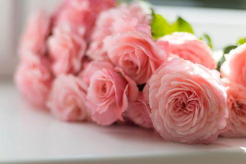 Обои Розовые розы лежат на столе