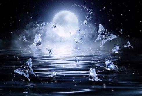 Обои Фантастические бабочки, порхающие в лунном свете