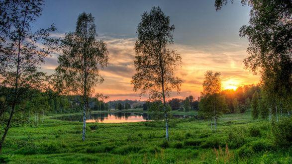 Обои Небольшое озеро, окруженное высокими березами на закате солнца