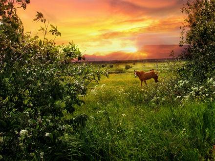 Обои Лошадь пасется на лугу на фоне заката