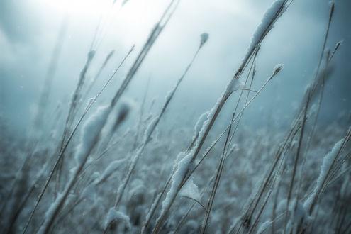 Обои Колосья в туманном поле в снегу, by Te0SX