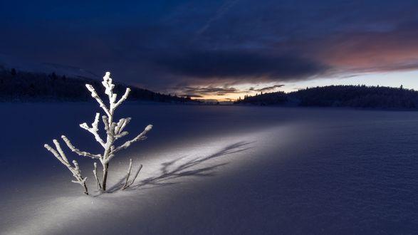 Обои Освещенное деревце на снежной поляне возле леса перед рассветом