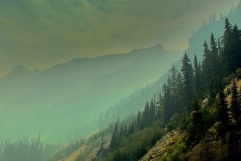 Обои Лесные склоны в Washington State / штате Вашингтон, фотограф Jesse Sacdalan