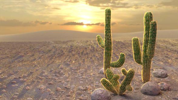 Обои Колючие кактусы в пустыне на фоне заката