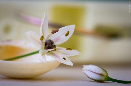 Обои Небольшие цветы на столе и в посуде, фотограф Eugene Banin
