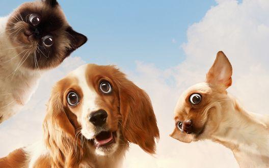 Обои Две удивленные собаки и кошка на фоне облачного неба