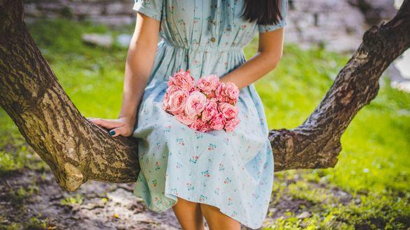Обои Девушка с букетом роз сидит на изогнутом дереве