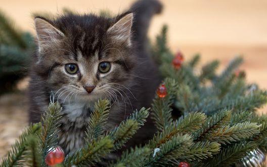 Обои Котенок у елки с игрушками