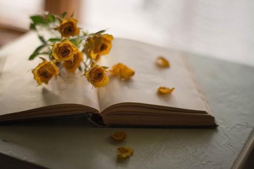Обои Желтые розочки на открытой книге, фотограф Julie Jablonski