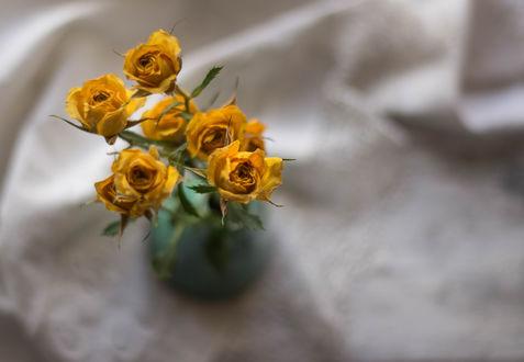 Обои Желтые розочки в баночке, фотограф Julie Jablonski