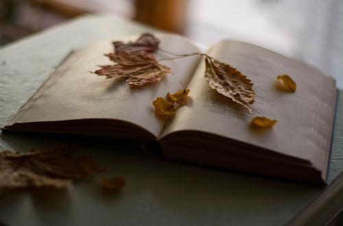 Обои Осенние листья на открытой книге, фотограф Julie Jablonski
