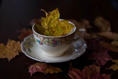 Обои Осенние листья в чашке на блюдце и рядом, фотограф Julie Jablonski
