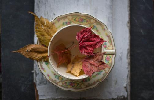 Обои Осенние листья в чашке на блюдце, фотограф Julie Jablonski